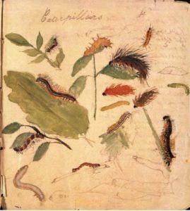 Гусеницы. Детский рисунок Беатрикс Поттер