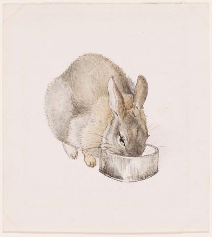 кролик ест из миски