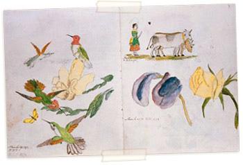 Рисунки 10-летней Беатрикс Поттер