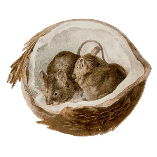 мышки в кокосовом орехе